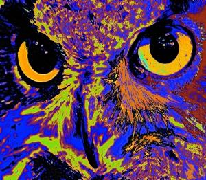 Vincent's Owl