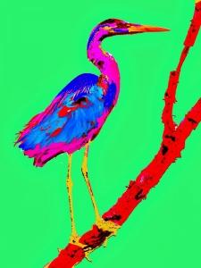 somewhat blue bird